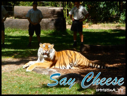 Tiger Presentation: Say Cheese