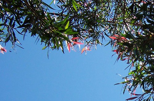 Red-tipped tree leaves