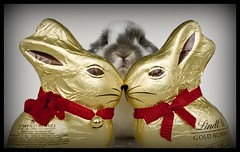Sometimes.........three's a crowd ! (Canonshot Mole) Tags: cute rabbit bunny love easter interestingness chocolate romance explore jealousy lindt top500 loveatfirstsight top20cute lightscoop