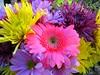 Easter Egg Color Flowers (SugarbearSteve) Tags: again nofuss noeggs novinegar happyeastereveryone nomuss noeggsaladsammichesallweek mybunniesuitseemsaliltighterthisyear mothernaturecoloredthese closetshrinkage