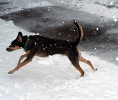 Tut_snow32808