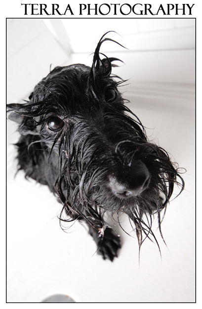 Fine art Scottie Dog photograph