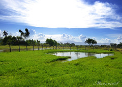 Green Meadow (MarorieS) Tags: green farm meadow cebu grassland personalbest cebusugbo proudlypinoy mykindofpicturegallery marories marosariosanchez cebuphotographyclub