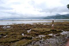 low low low loooo tide
