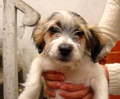 Te doy todo mi amor y algo ms.... ;-) (Carina_85) Tags: dog santafe argentina amor can rosario perra dulzura incondicional