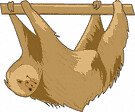 sloth (3doel82) Tags: fish bird animals insect gambar koleksi ikan belajar burung binatang carnivora serangga mamalia amphibi