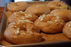 Peter Reinhart's Bagels - Baked