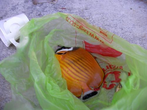 koh samui-fishing @bangrak2