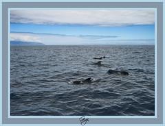 Delfini  /  Dolphins (G.hostbuster (Gigi)) Tags: sea sky mer clouds nuvole mare ciel cielo dolphins nuages gmt delfini