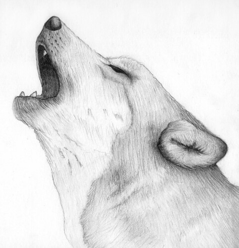 Gray Wolf Howling Drawing Wolf Cry