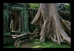 Ta Prohm Temple, Cambodia  403