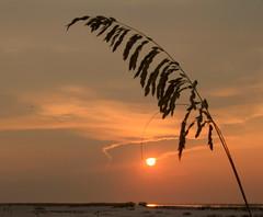 SeaOats at Sunset