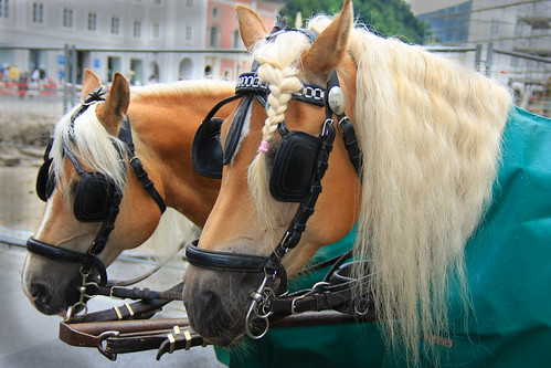 CAUTION ► All kinds of commercial usage, publication & hyperlinks are prohibited and illegal ! ► © Copyright by B. Egger - Fiaker horses Salzburg Austria EU - The Sound of Music :: eu-moto