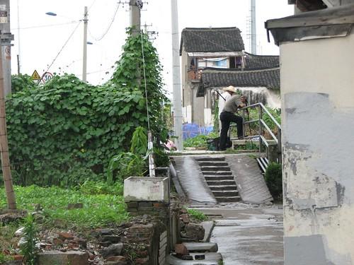 Jiangnan green
