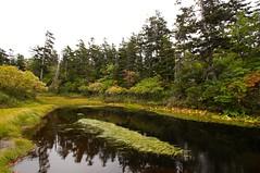 バショウ沼