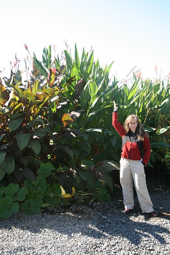 Kim and the incredibly tall cannas at Cistus Nursery outside Portland