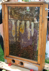 Bees in a case