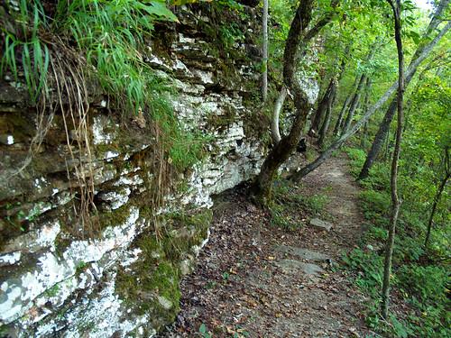 Mossy Bluff