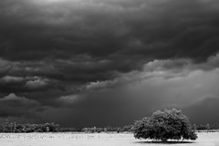 Isolated II (davewjr) Tags: bw storm nature clouds freaky niksoftware silverefex
