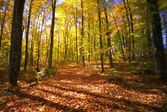 A place called Autumn, 65 seconds (Zeb Andrews) Tags: autumn trees fall film nature yellow forest outdoors countryside vermont grove path newengland pinhole clearing zeroimage fallenleaves zero69 fujipro160c bluemooncamera zebandrews pinscapes zebandrewsphotography