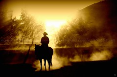Heavenly Cowboy