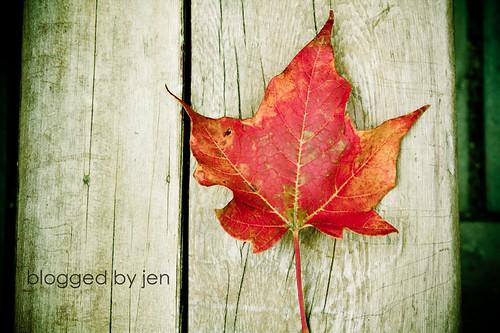 leaf -- color