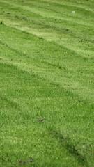 Hampton Court Palace (bortescristian) Tags: uk inglaterra autumn trees england tree london nature canon court garden is al britain united great kingdom natura palace powershot septem