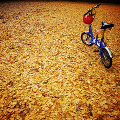 bike on yellow (shotam) Tags: park morning nature bike bicycle yellow square ginkgo snap explore  osaka  grdigital ricoh  grd pentacom grd2 toycamera34plugin grdbook