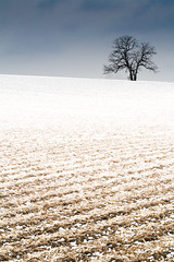 This Hour, This Field (Loren Zemlicka) Tags: november winter sky white snow macro tree nature field lines wisconsin clouds rural canon landscape midwest farm horizon country ground hills dirt 5d plow 2008 canoneos5d flickrexplore canonef100mmf28macrousm lorenzemlicka