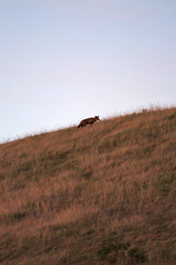 1coyote (John Hollowell Photography) Tags: sunset moonrise ocean view night sky sunsetting montereybay pacificocean coyote deer santacruzmountains skyview california fullmoon californiaredwoodsphotography johnhollowellphotography