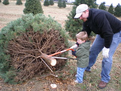 James and Dad Cutting Down the Christmas Tree (bubbabarton) Tags: fun with bartons