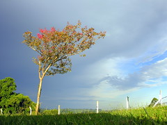 Natureza (Claudio Marcon) Tags: flowers blue trees brazil sky nature azul brasil clouds natureza céu nuvens rs riograndedosul árvores fotoclube platinumphoto theunforgettablepictures theunforgettablepicture claudiomarcon