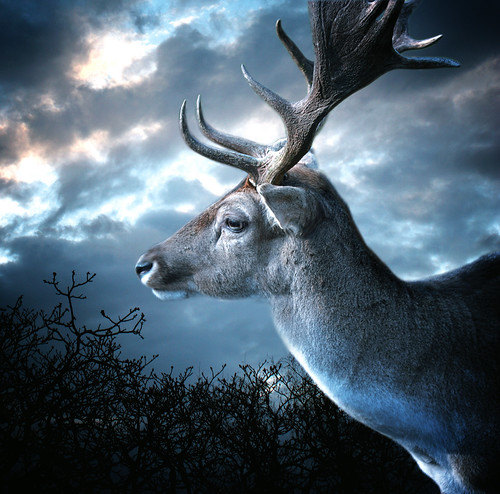 Stag at the evening
