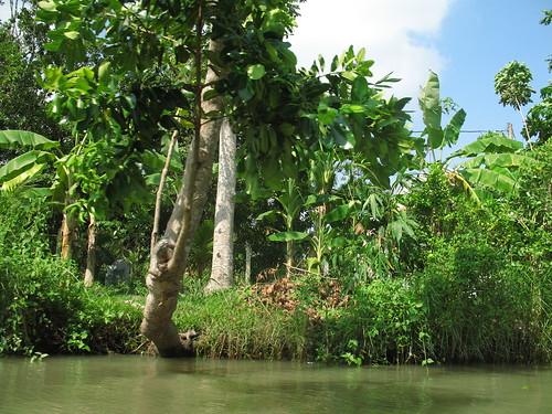 Along the banks of the Mekong River (8)