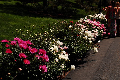 A Late-Spring Stroll in the Perennial Garden | NYBG