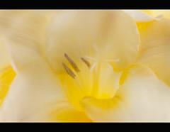 (Lisa Gordon Photography) Tags: 1001nights floralfantasy yourpreferredpicture flowersworld unforgettableflowers allbeautifulshotsandmanymore composersbreath artnetcontemporaryartist lomejordemisamigos lisagordonphotography