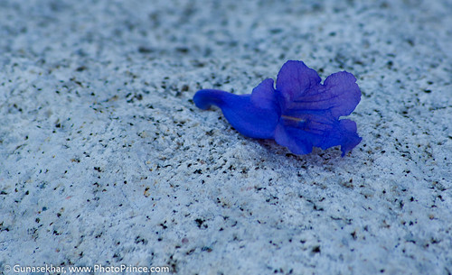 BlueLilyWeb-6556