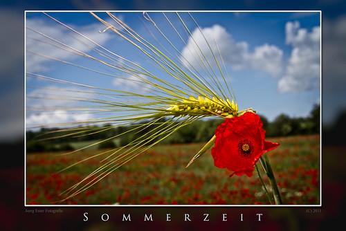 Sommerzeit - Mohnblume und Gerstenkorn