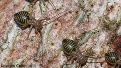 Termitas ?? (Fotos Leandro) Tags: insectos macro uruguay lumix panasonic fz50 dcr250 raynox raynoxdcr250 abigfave dmcfz50 valdense buzznbugz