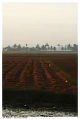 contour'd (Naseer Ommer) Tags: india water canon rice kerala ricefields contour paddyfields southindia alleppey ploughed alapuzha canon100mm waterbody kuttanad naseerommer canoneos40d