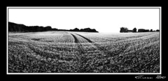 Spring (cPutter) Tags: bw panorama white black field germany geotagged spring europe novideo hugin cputter geo:lat=51325235 geo:lon=6910744