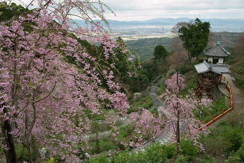 Sakura trees and the distant view of Kyoto