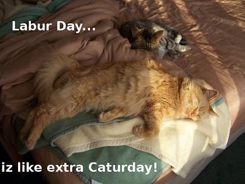extra-caturday