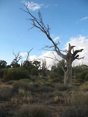 Menindee Lakes (yublocka) Tags: travel uni 2008 brokenhill menindee ruralgp abcopen:project=wateris yublocka