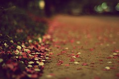 Edges of Where (Js) Tags: pink white green grass petals focus soft raw nef dof bokeh pavement gimp sidewalk manual 50mmf18d ufraw hbw vintagefilmeffect fxfoundry flickraddictioncausesmetopostpicturesthatishouldsavetopostinabokehwednesdayassoonasigethome