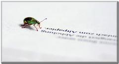 A, B, C, D ... (AndreaKamal.com) Tags: macro nature insect bravo hamburg onwhite tamron90mm firstquality fpg youregreat aplusphoto canoneos40d obq httpwwwandreakamalde