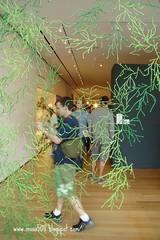 MOMA-某個裝置藝術