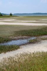 Anglų lietuvių žodynas. Žodis marsh reiškia n pelkė; liūnas lietuviškai.