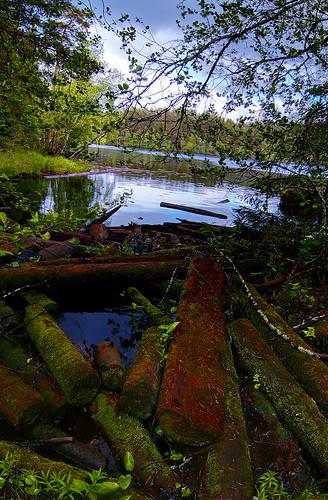 lake logs