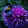 In The Garden (Donna Nadia) Tags: flower animals heemskerk huistuin